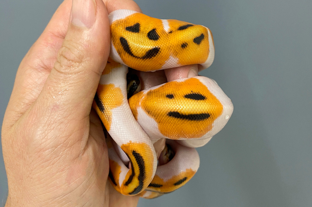 this snake has face emoji over his body